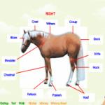 A ló részei lovas játék